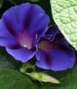MorningGlories-02