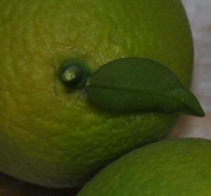 GreenOranges-Detail