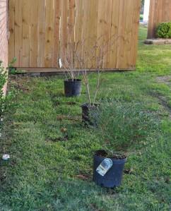 Planting-3