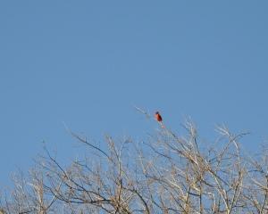 Cardinal_March2012