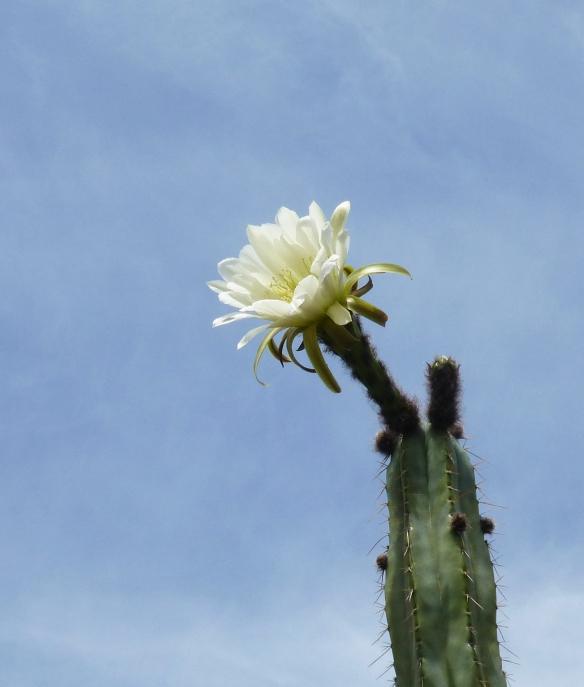 CactusCorsage