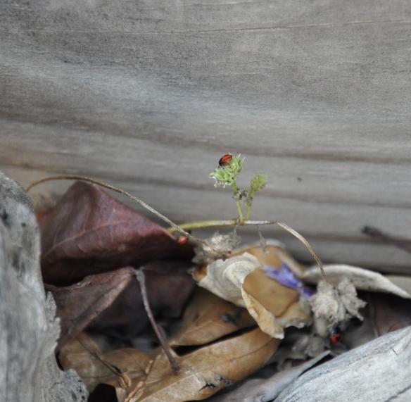 TinyLadybugs-2