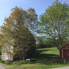 I loved the way this tree looked against the barn.