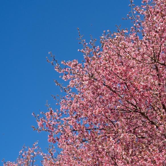 arboretum_02-16-17-26