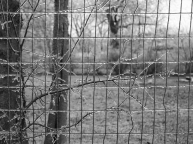 Icy Fence - 3