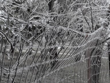 Icy Fence - 1